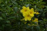 fleur-exotique_jaune