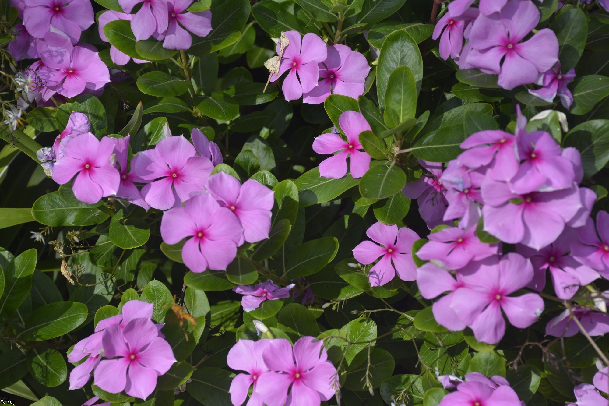 grand-format_des-fleurs