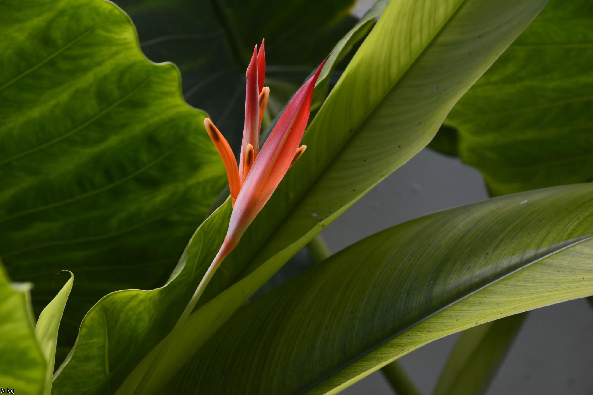 naissance-de-fleur