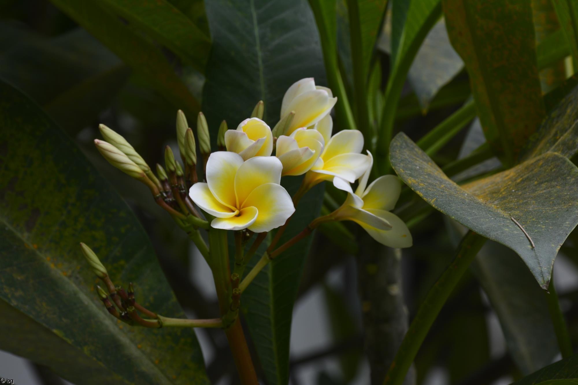 plante-grasse-fleur-jaune