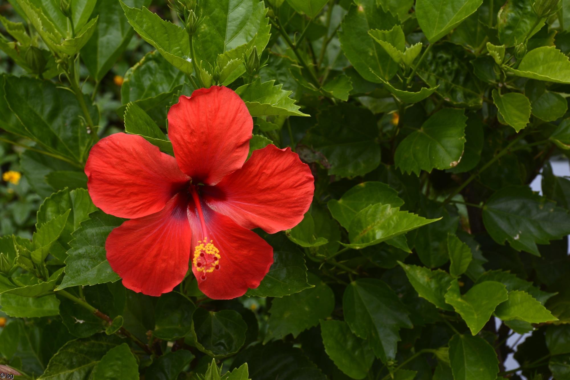 tropicale-et-exotique