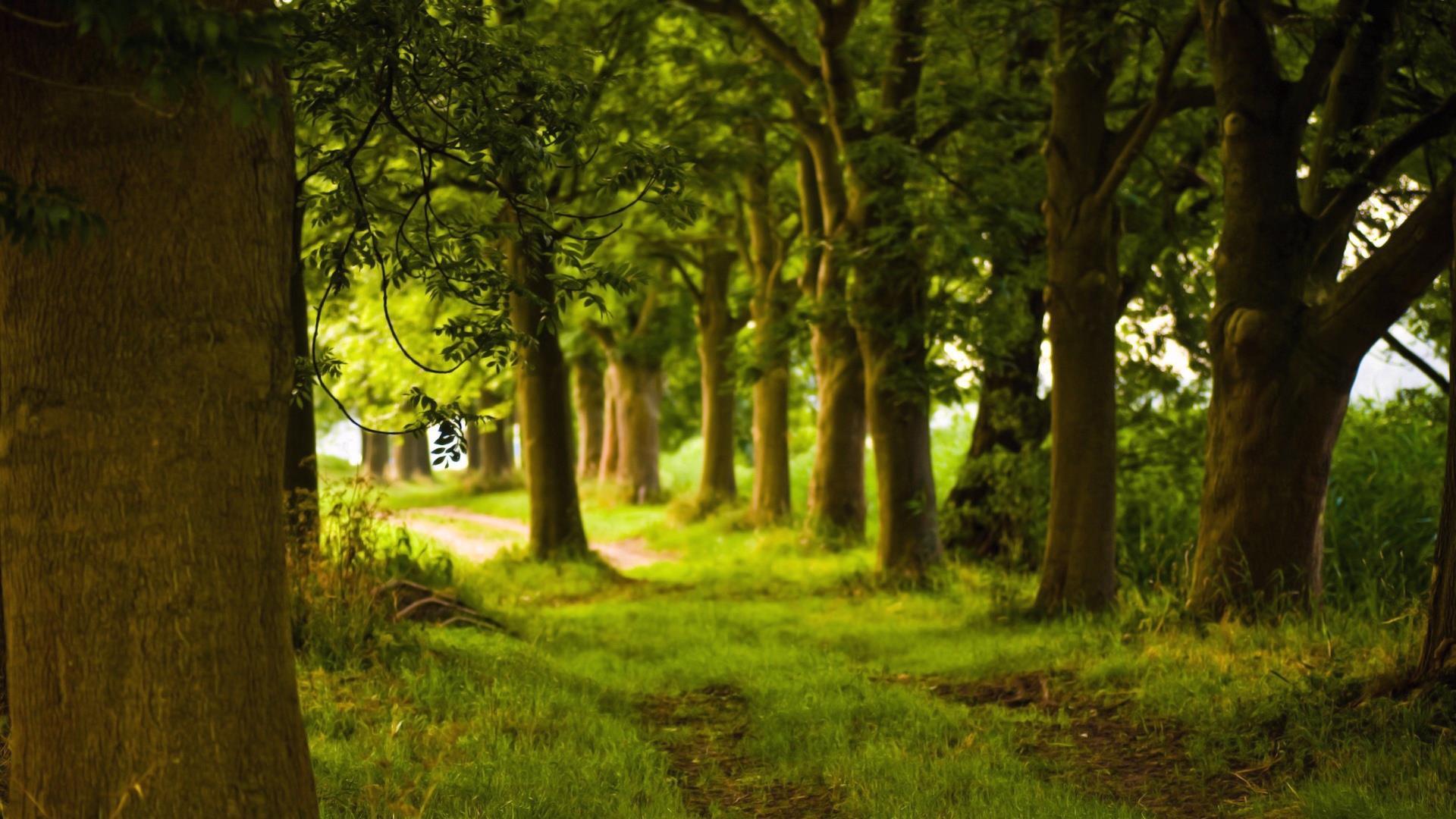 gratuit_paysage-en-grand-format-a-telecharger_01