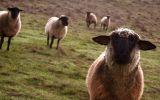 fond-ecran-animaux-et-nature-libre_04