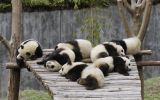 telecharger-fond-ecran-animaux-et-nature-libre_gratuit_03