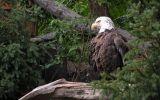 telecharger-fond-ecran-animaux-et-nature-libre_gratuit_04