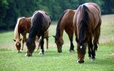 telecharger-fond-ecran-animaux-et-nature-libre_gratuit_05