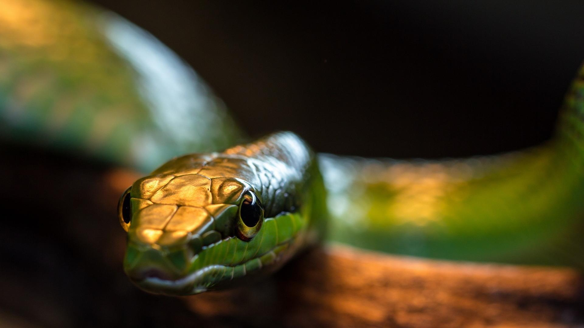 serpent_animaux-sauvages_HD-a-telecharger_03