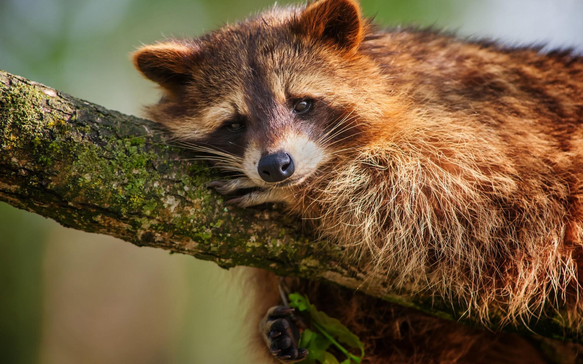 sur-la-branche_animaux-sauvages_HD-a-telecharger_15