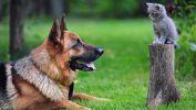 berger_animaux-domestiques_grand_format-du-jour_01