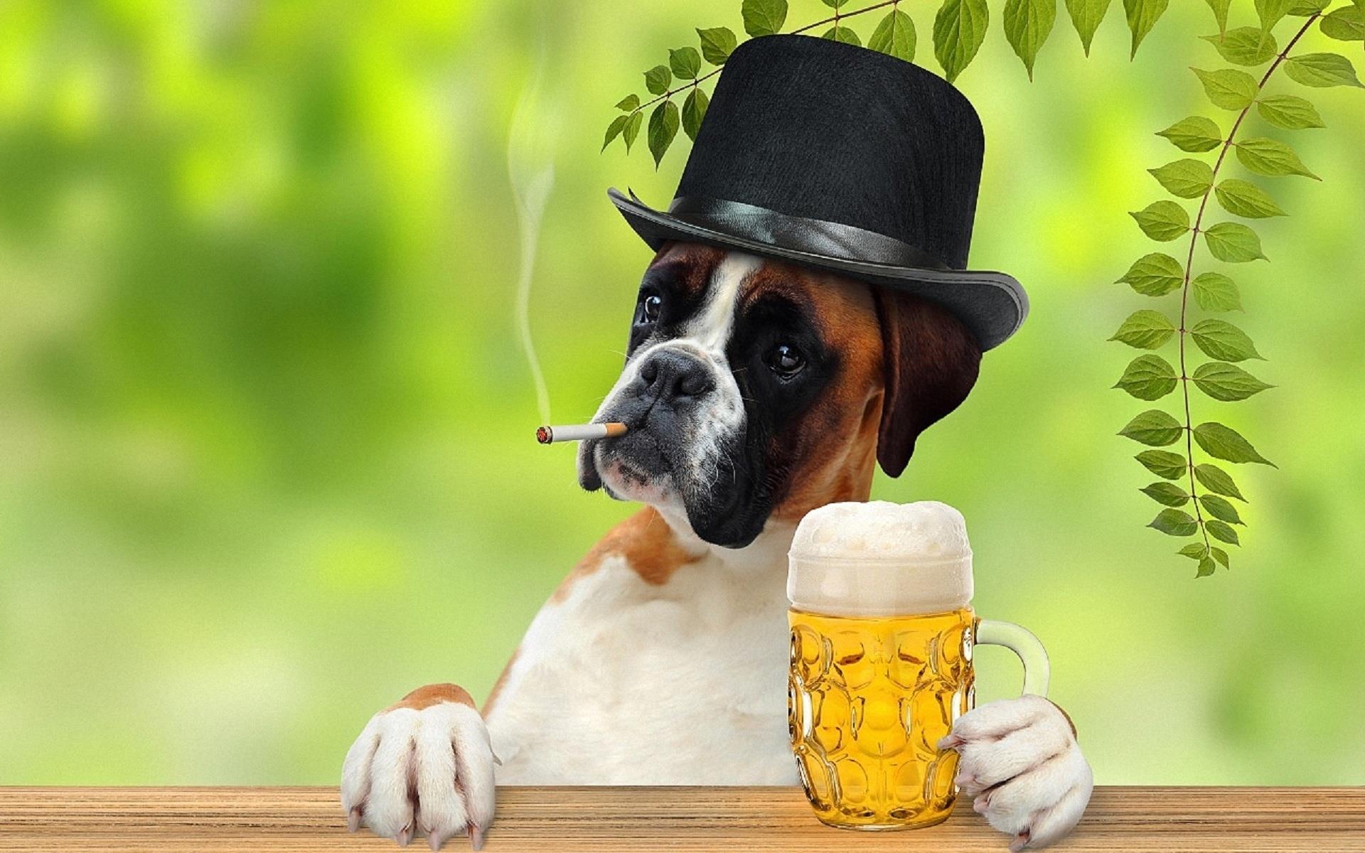 boxer-pub-biere_animaux-domestiques_grand_format-du-jour_09