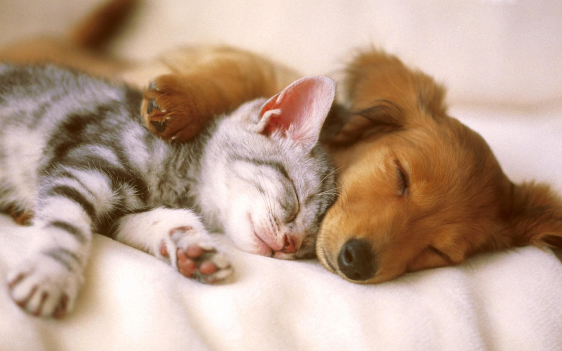 chat-et-chien_animaux-domestiques_grand_format-du-jour_07