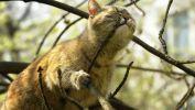 chat-qui-croque_$animaux-domestiques_grand_format-du-jour_16