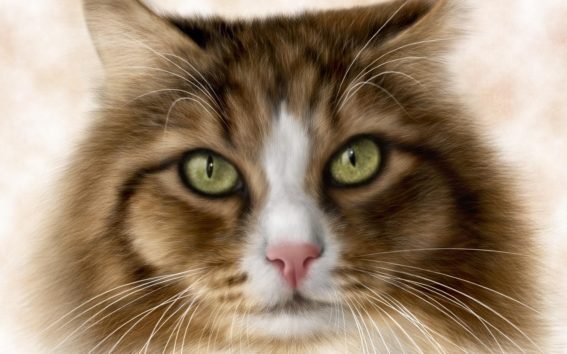 chat-tete_animaux-domestiques_grand_format-du-jour_10
