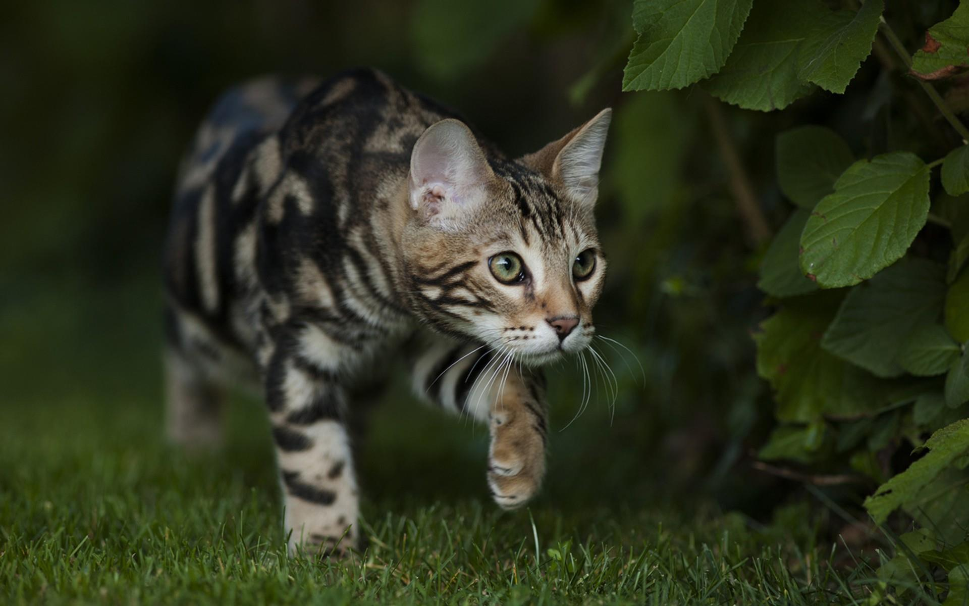 chaton-explorateur_animaux-domestiques_grand_format-du-jour_12