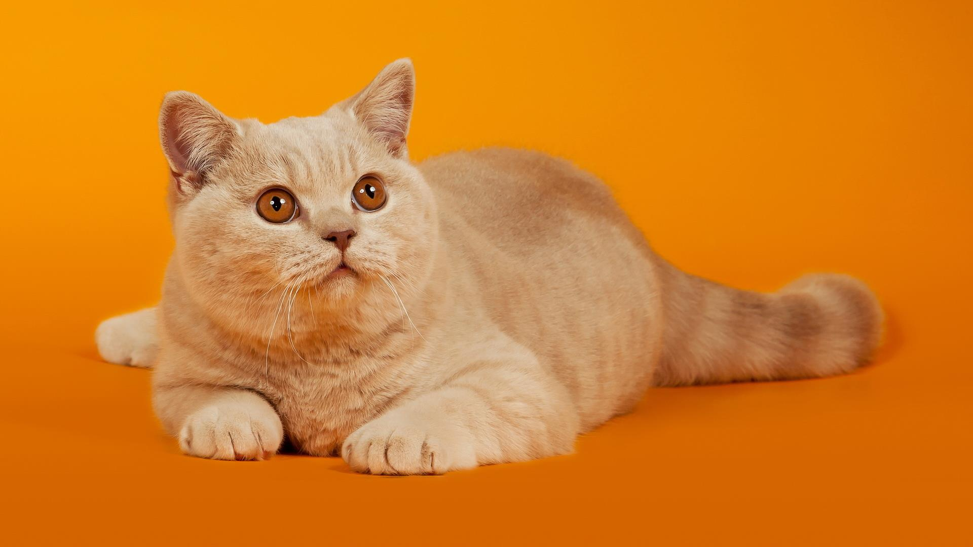 chatons_animaux-domestiques_grand_format-du-jour_02