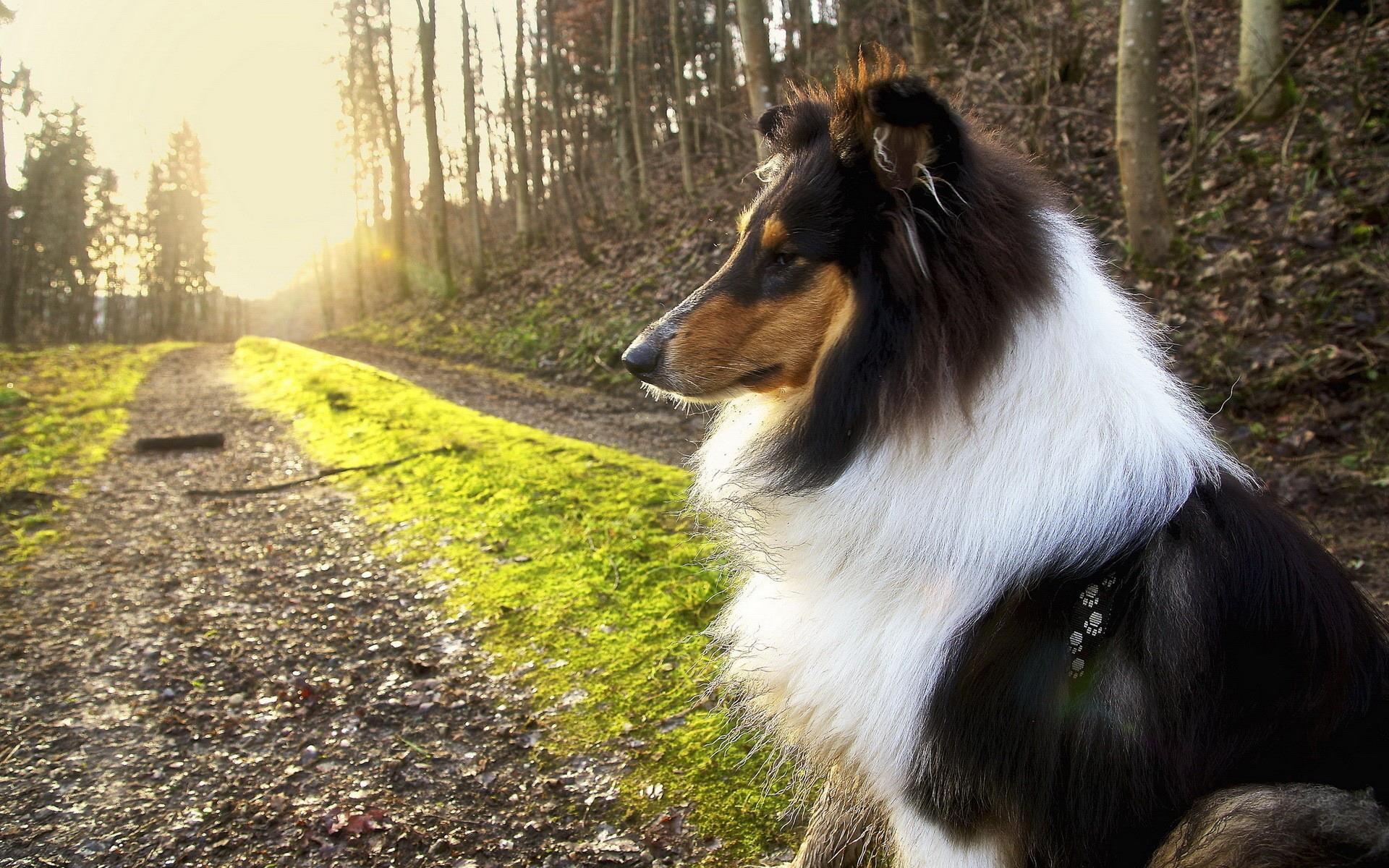 colley_animaux-domestiques_grand_format-du-jour_11