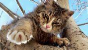coup-de-patte_animaux-domestiques_grand_format-du-jour_17