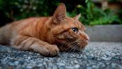 craintif_animaux-domestiques_grand_format-du-jour_13