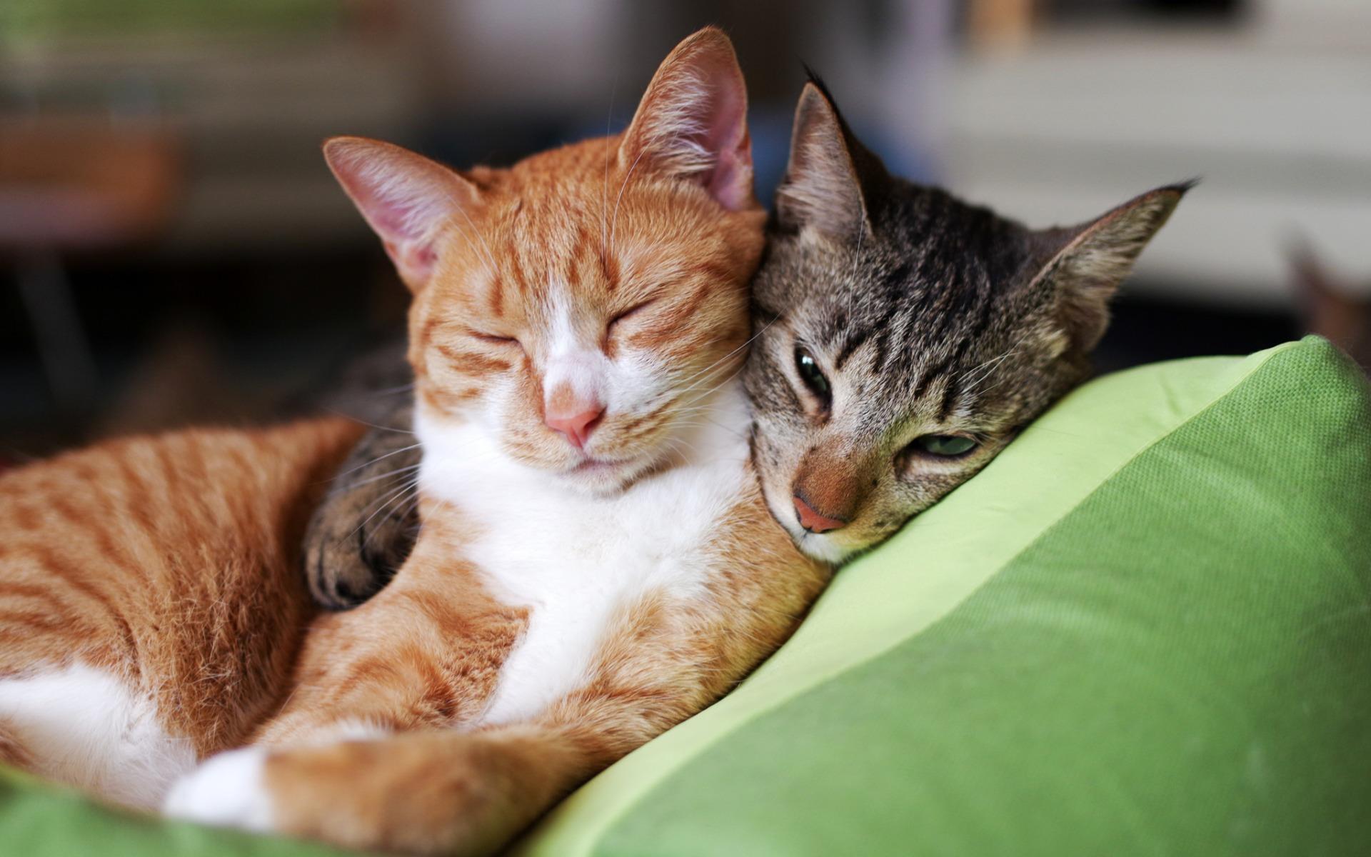 deux-chats_animaux-domestiques_grand_format-du-jour_04