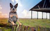 garde_animaux-domestiques_grand_format-du-jour_03