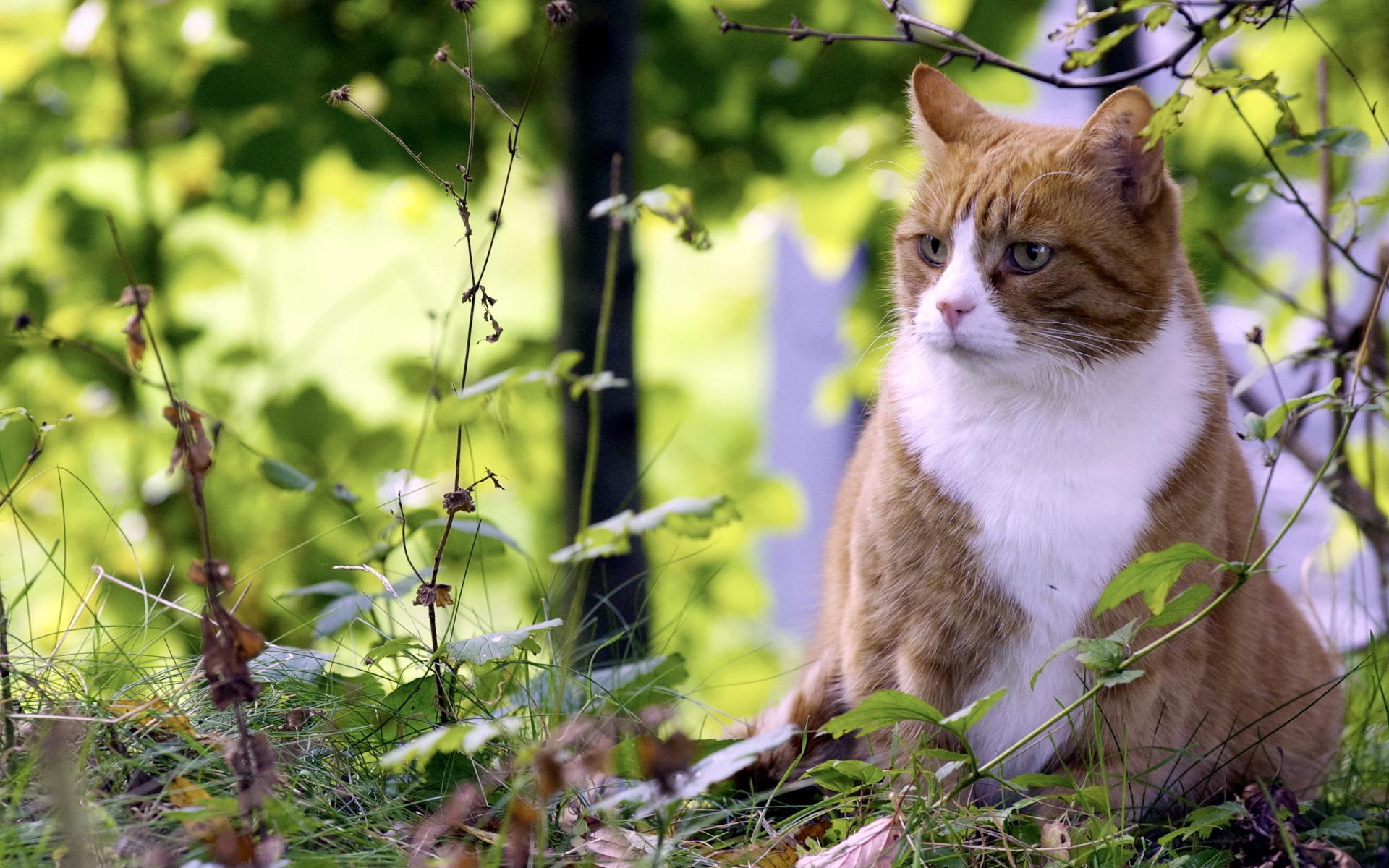 je-te-vois_animaux-domestiques_grand_format-du-jour_18