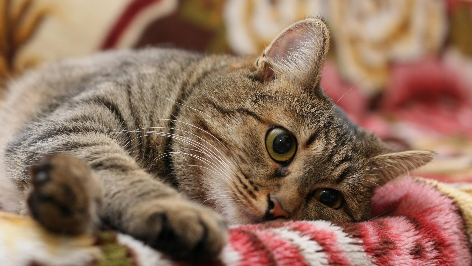 lovar_animaux-domestiques_grand_format-du-jour_05