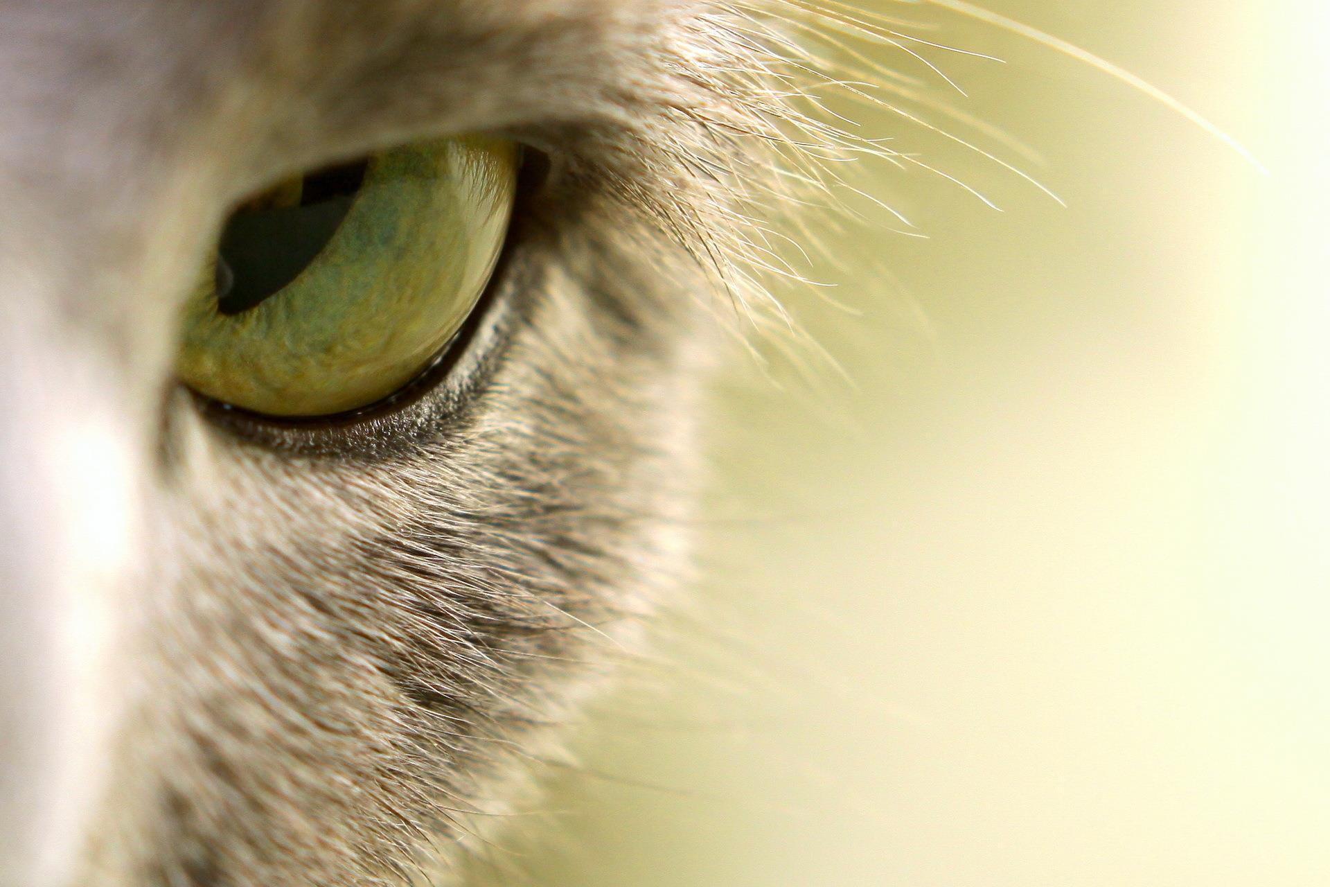 oeil_animaux-domestiques_grand_format-du-jour_20