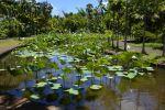 fleurs-de-lotus_bassin-naturel_2