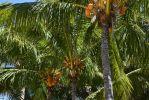 cocotiers_HD_fond-grand-ecran_gratuit_2