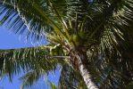 palmier_HD_fond-grand-ecran_gratuit_1