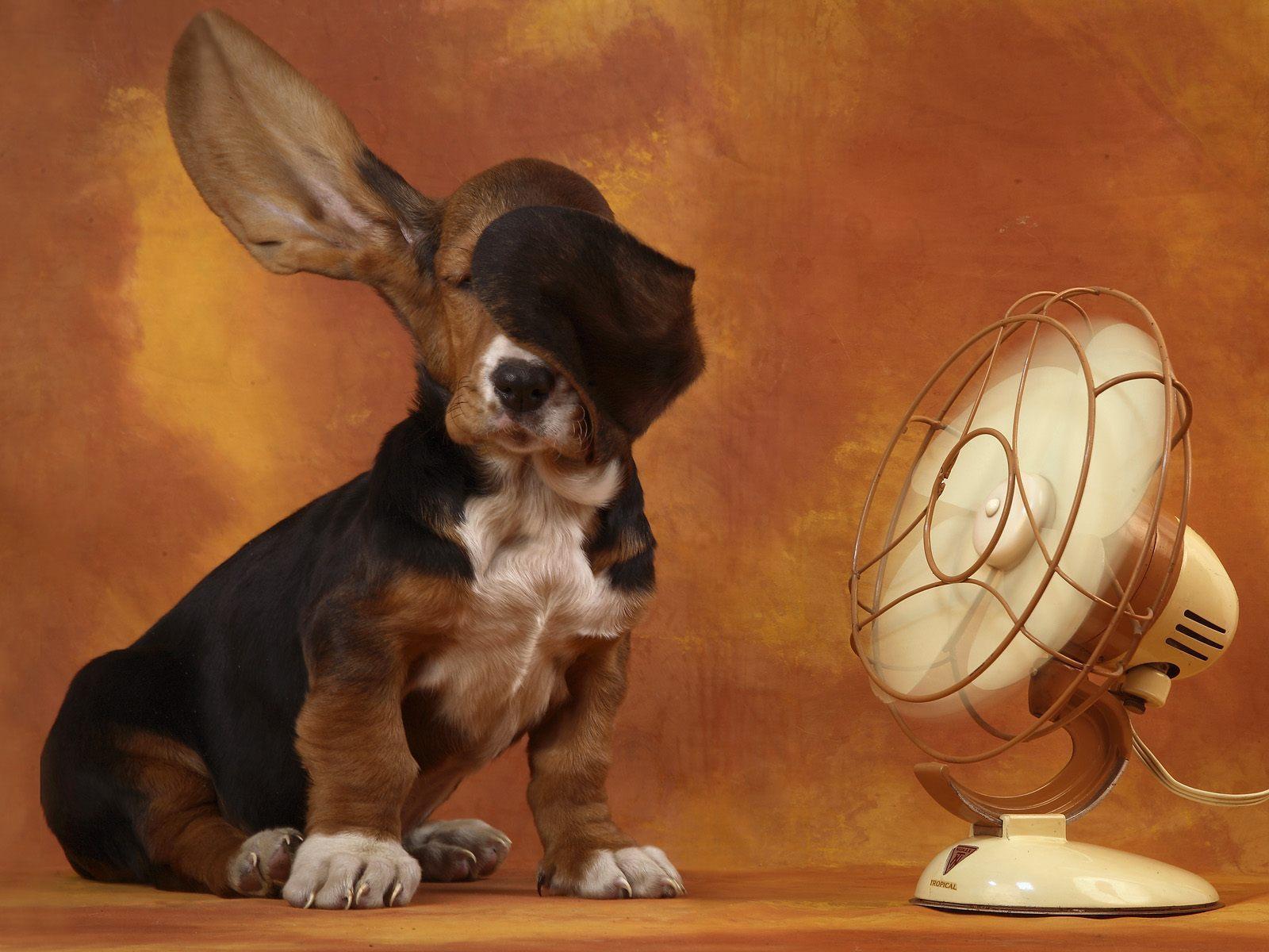chien-et-ventilateur_sympa