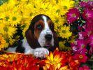 fond-ecran_chiens_1