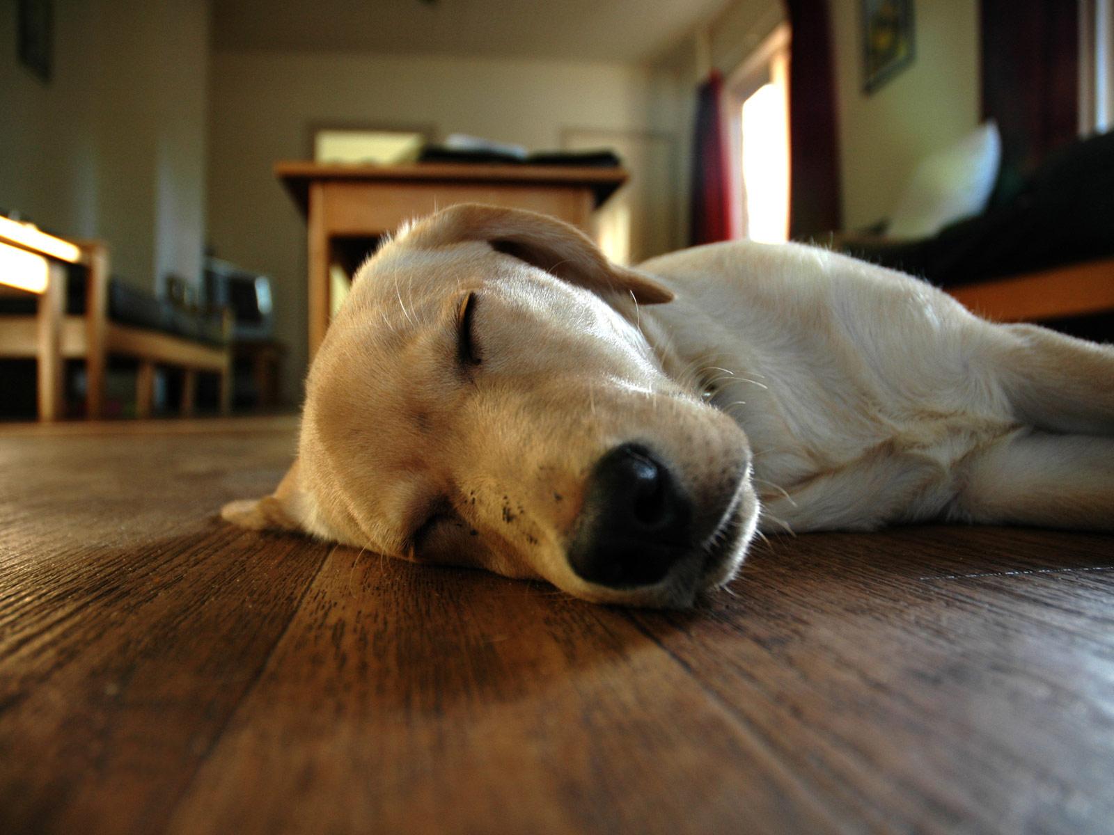 la-sieste_chien-endormi