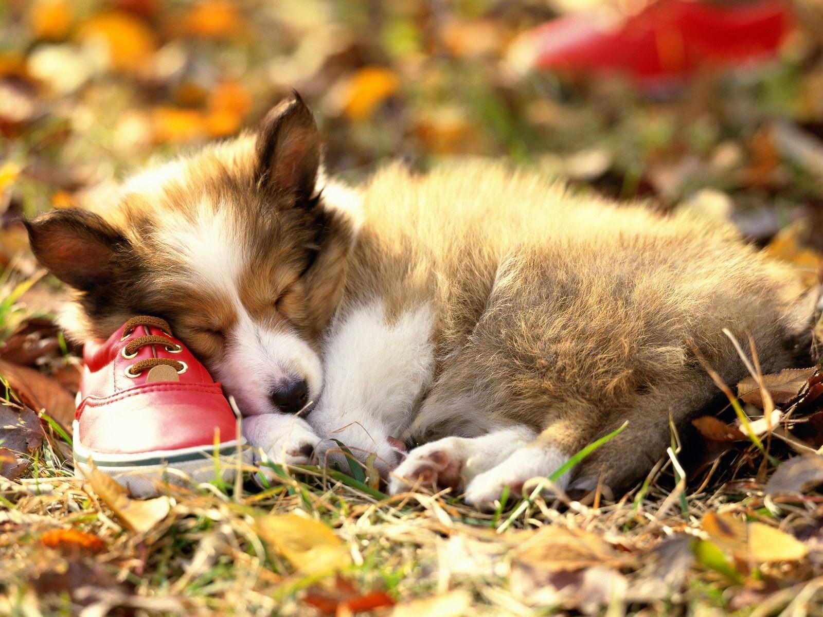 la-sieste_et-la-chaussure