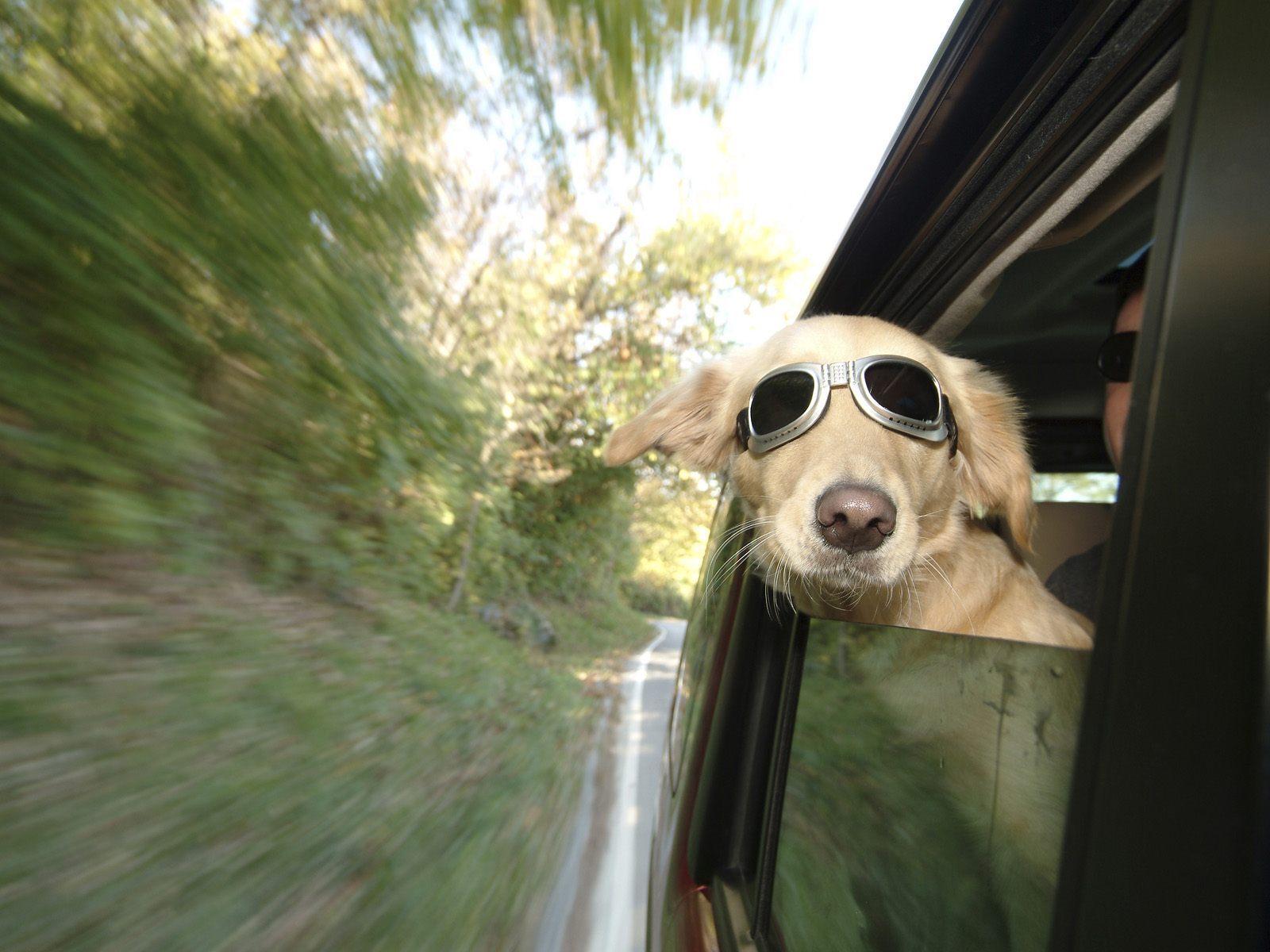le-chien-qui-voyage