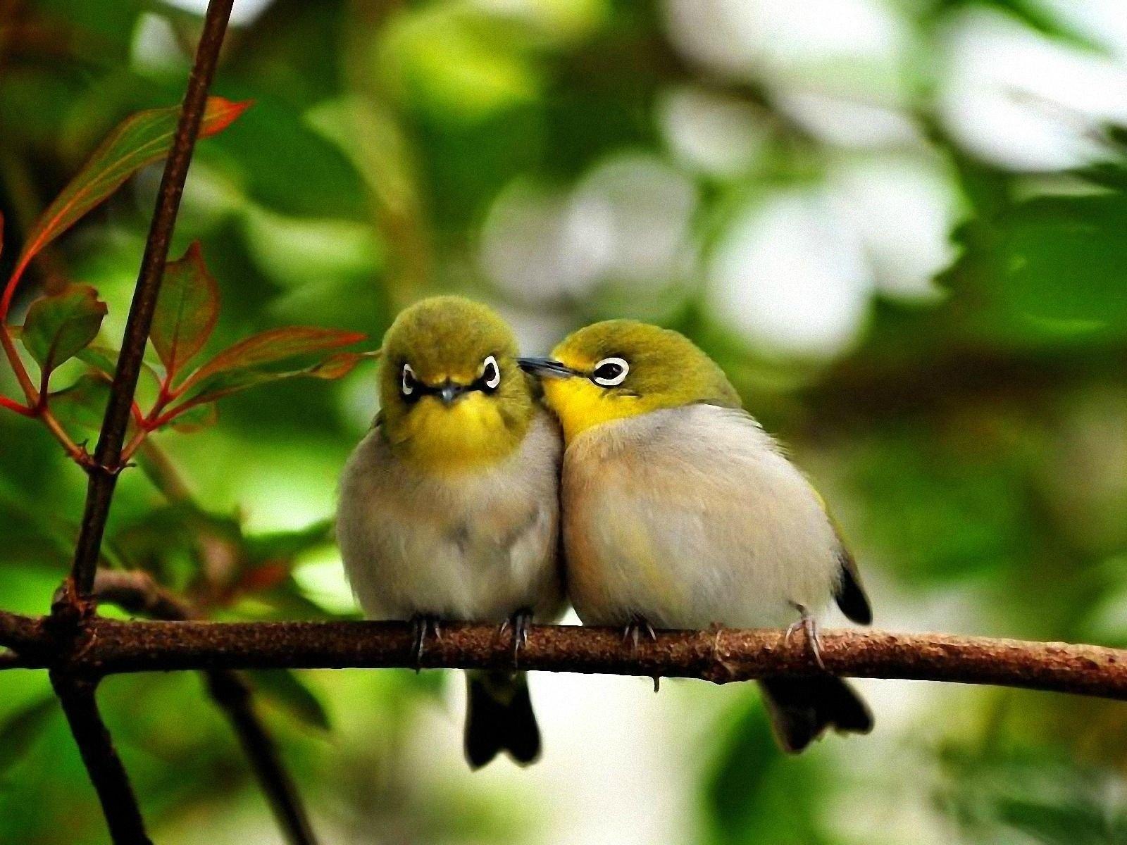bisou-couple-oiseaux