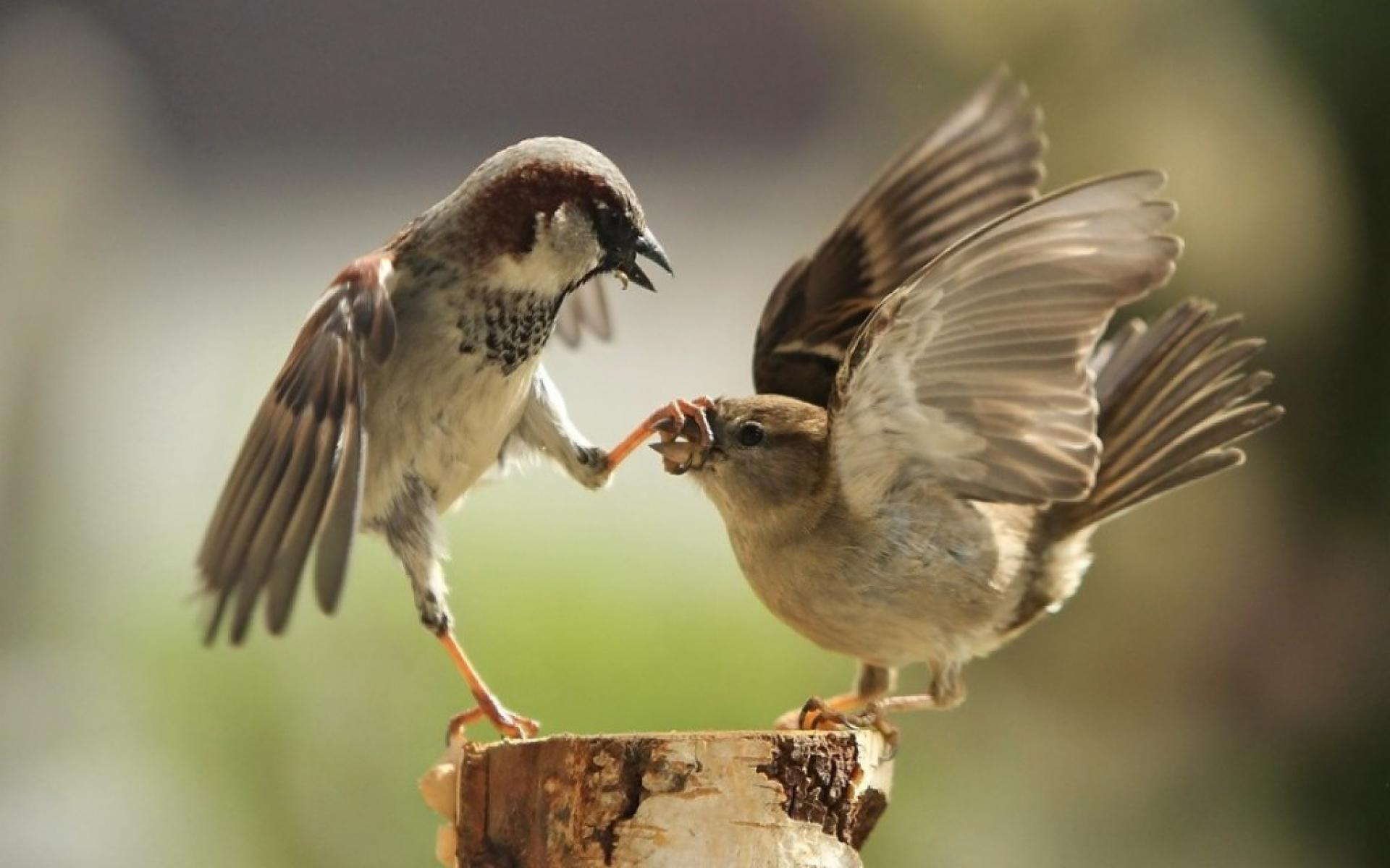 dispute-de-couple-oiseaux