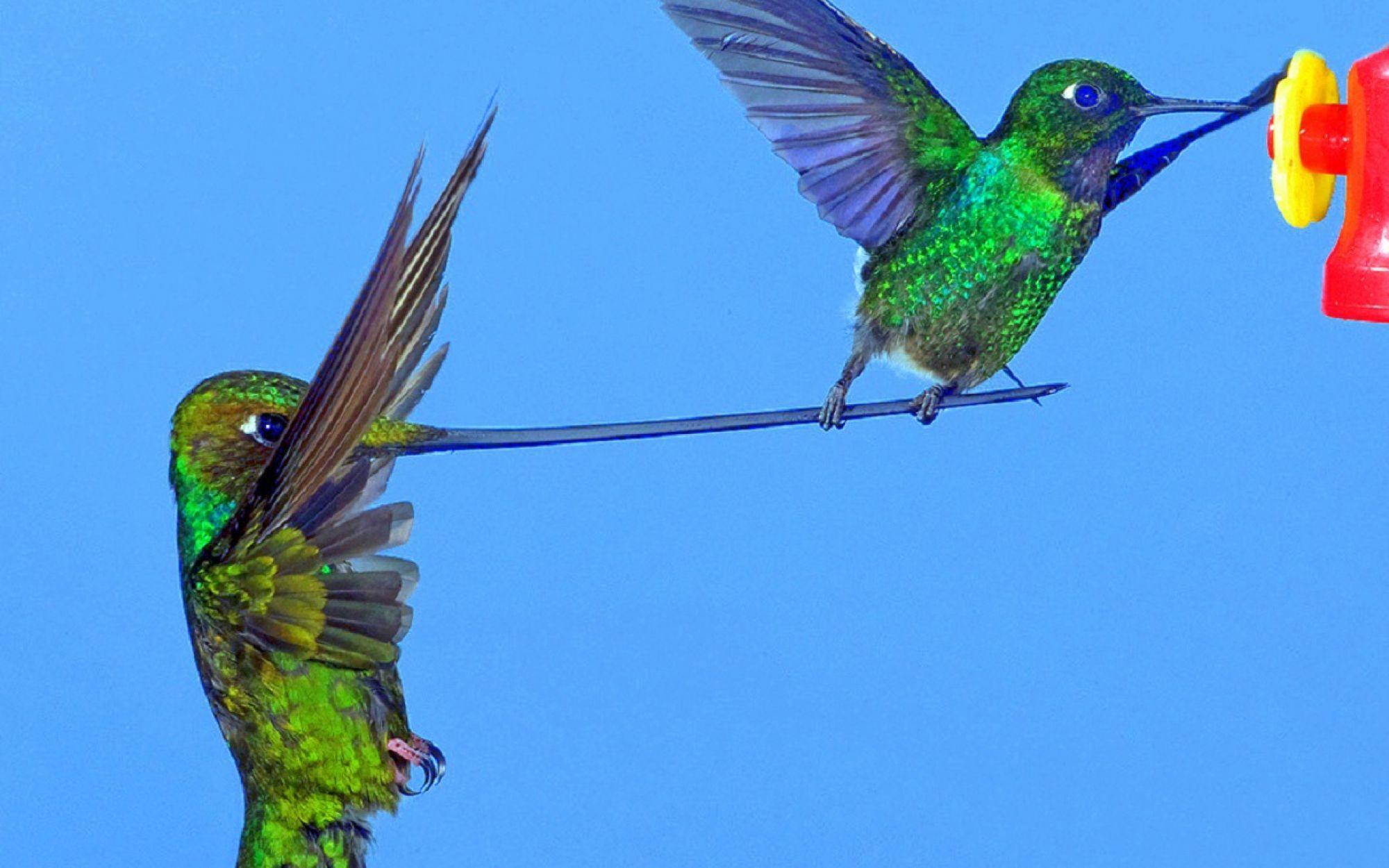 entraide-les-oiseaux-vivent-en-couple