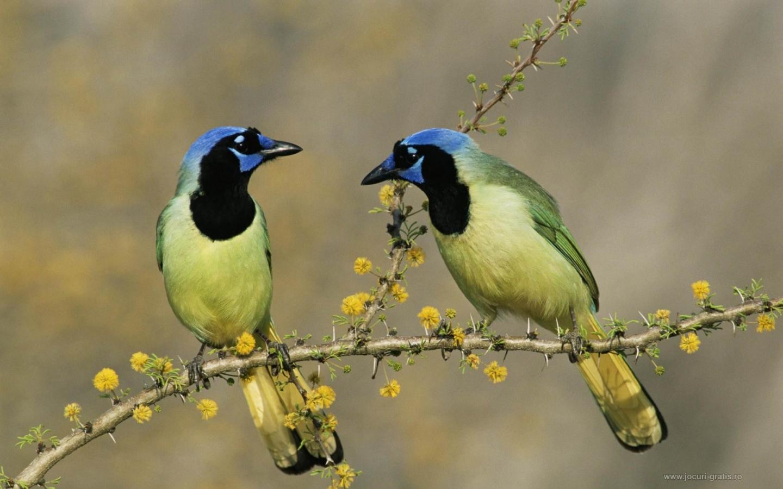 rencontre-oiseaux-en-couple