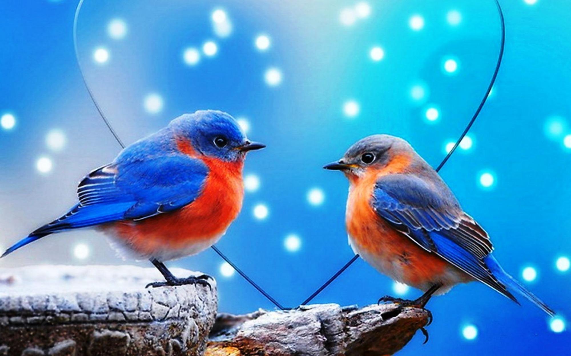 rendez-vous-oiseaux-en-couple