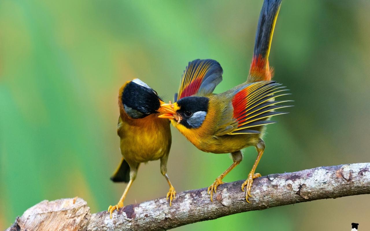 sur-la-branche-couple-oiseaux