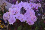 bouquet-orchidees-rares