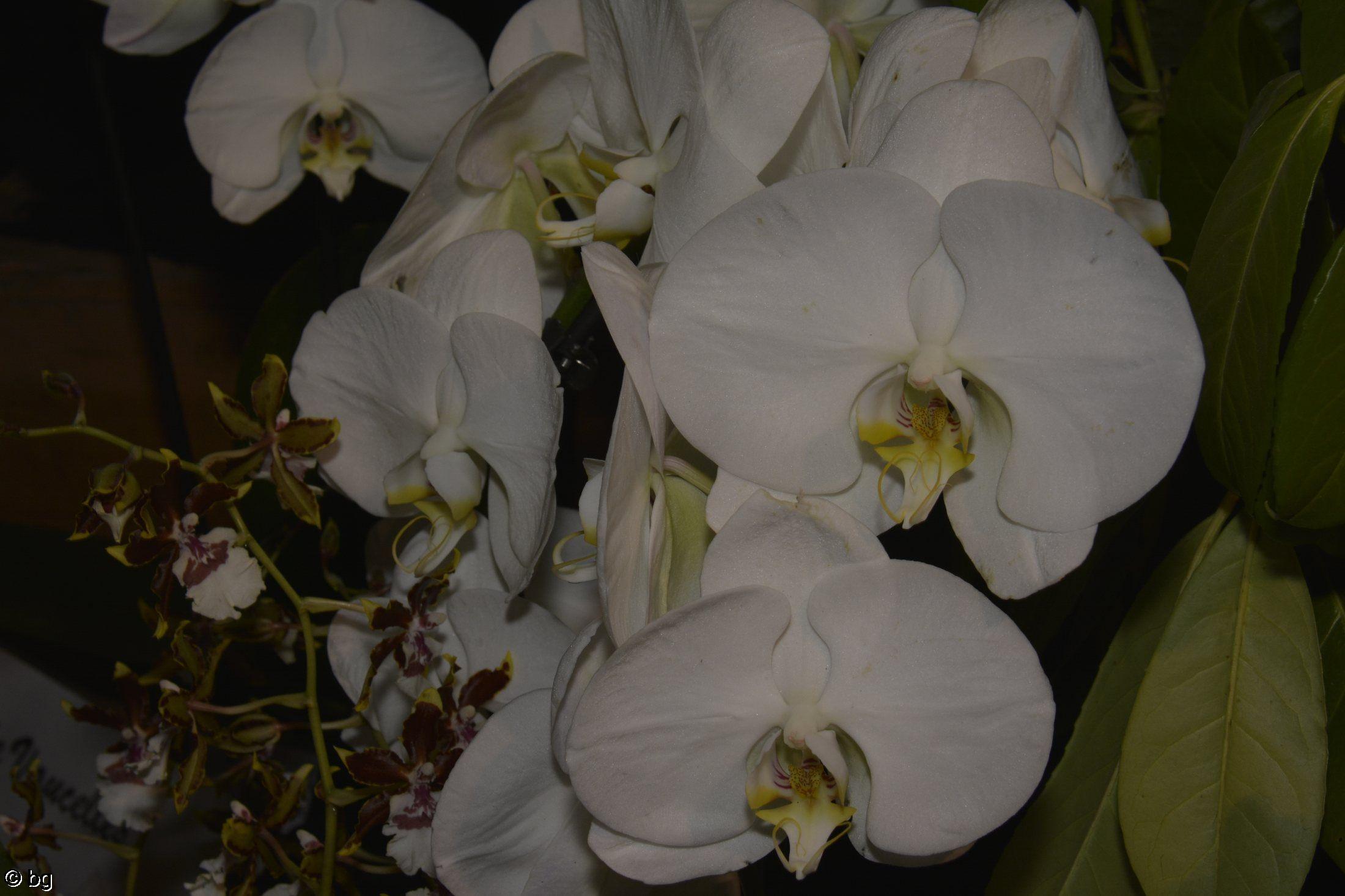 des-orchidees-rares-bouquet-blanc