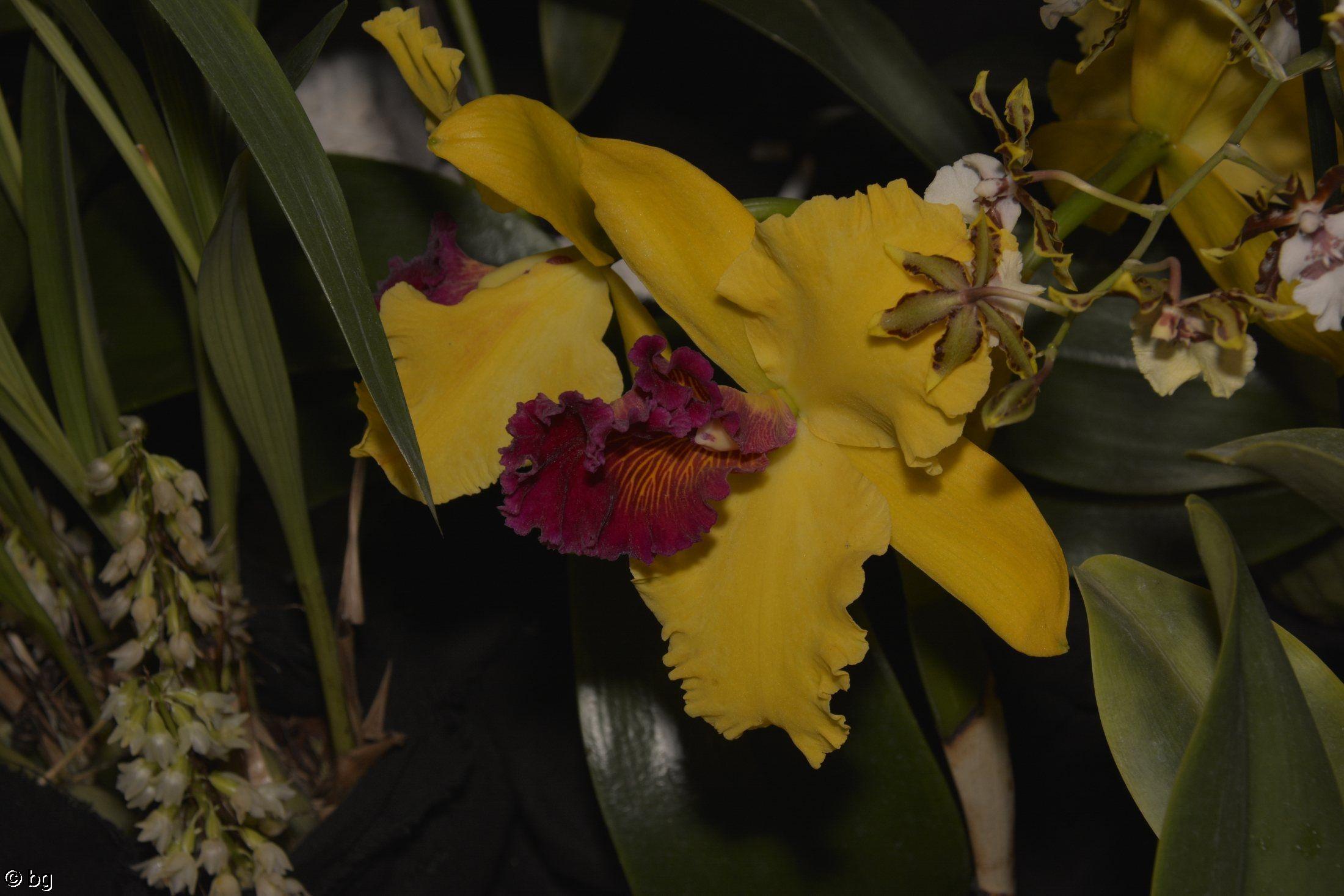 des-orchidees-rares-jaune