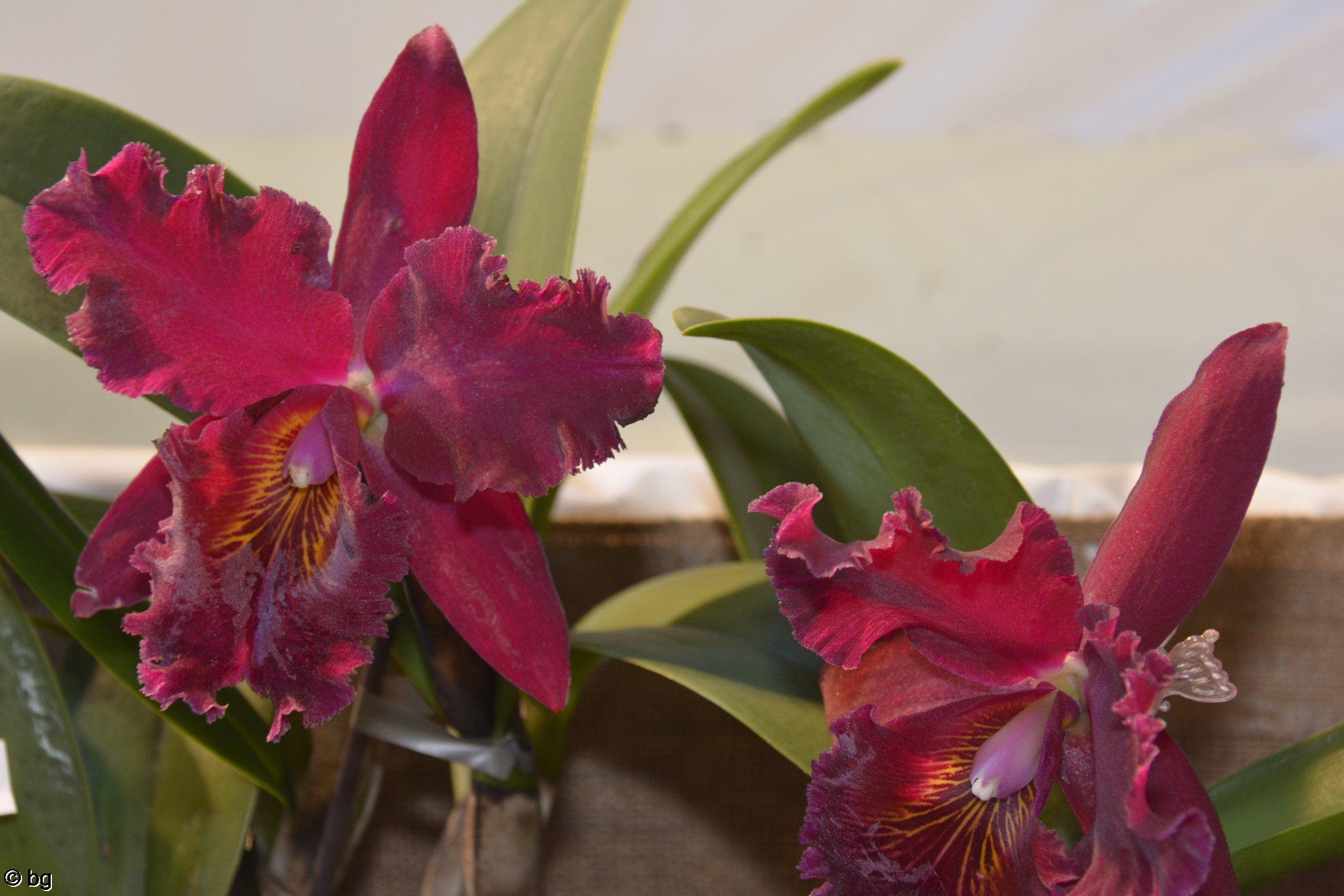 des-orchidees-rares