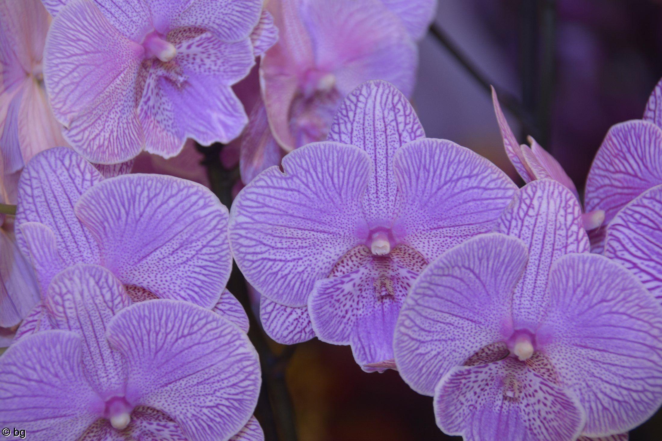 macro-phot-des-orchidees-rares