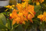 orchidees-exposition-bouquet-orange