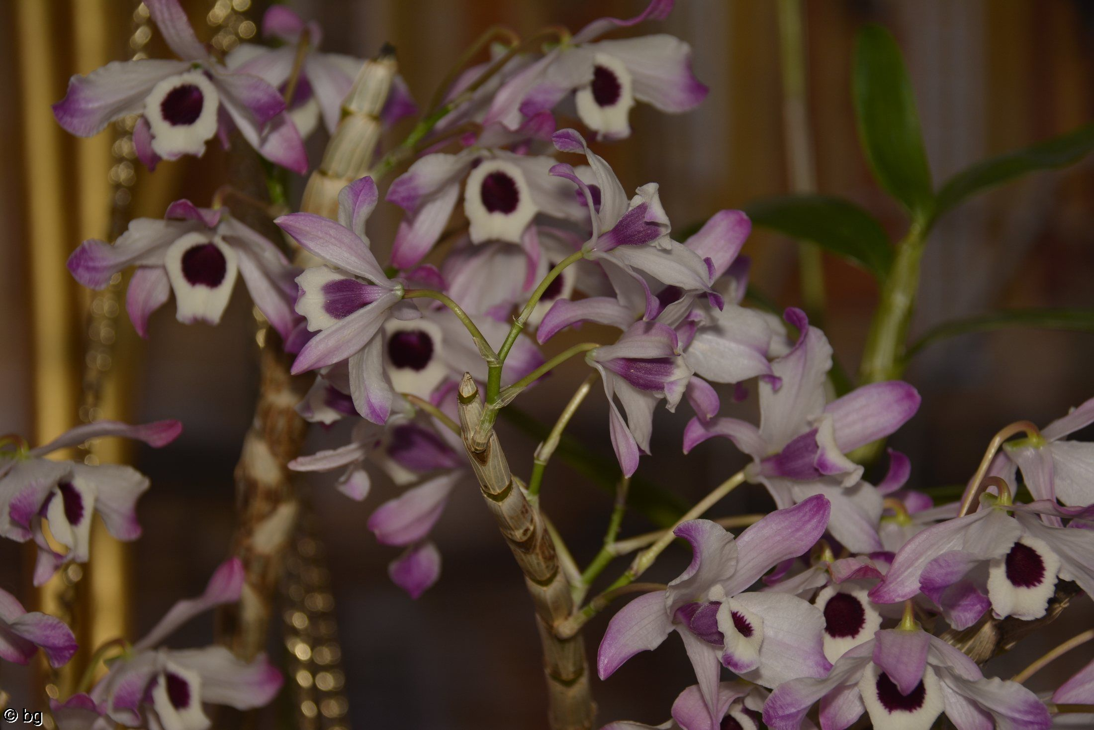 orchidees-exposition