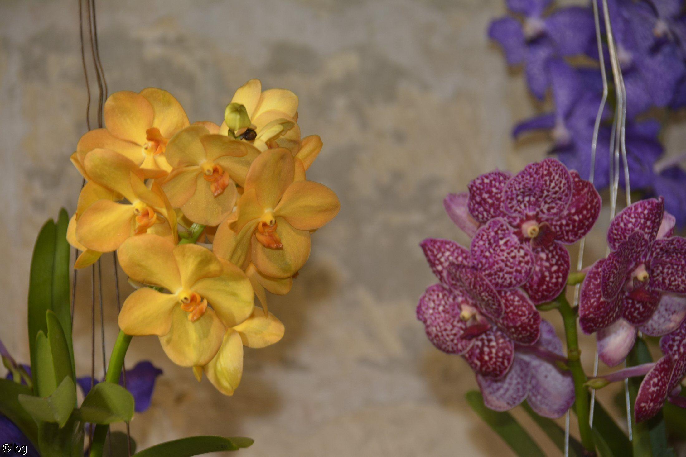 sur-le-mur-orchidees-exposition