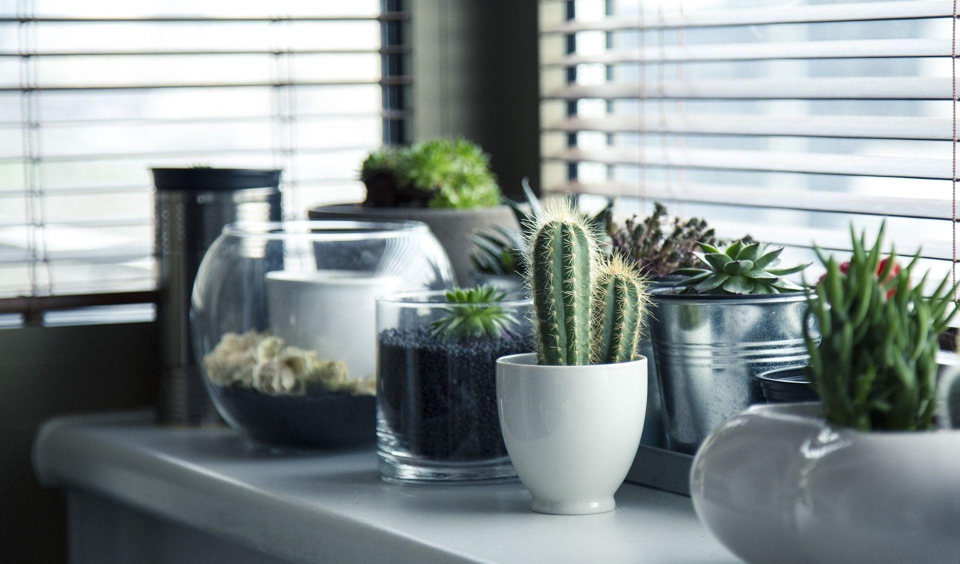 plantes-cactus-maison